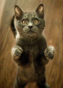 Filler image of a cat.